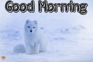 winter good morning